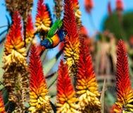Papagei lehnt sich abwärts zwischen Anlagen Stockbilder