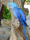 Papagei in Pattaya, Thailand lizenzfreie stockfotografie