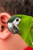 Papagei und das menschliche Ohr Stockfoto