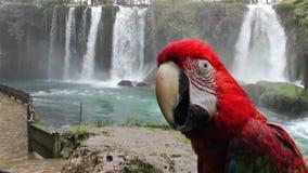 Papagei und Wasserfall stock footage