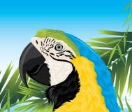 Papagei unter Palmenzweigen Stockfotografie