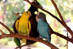 Papagei zwei Stockbild