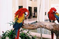 Papageien stockfoto