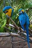 Papageien Stockfotografie