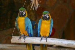 Papageien Lizenzfreies Stockfoto