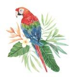 Papageien-Aquarell-Blumenblumen-Blätter Plumeria-tropischer Hibiscus lizenzfreie abbildung