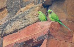 Papageien auf Turm Qutub Minar in Delhi, Indien lizenzfreie stockfotos