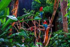 Papageien-Aufstellung Lizenzfreies Stockbild