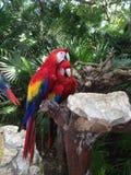 Papageien, die auf Baum umarmen Stockbilder
