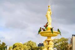 Papageien, die im Brunnen baden Stockfotos