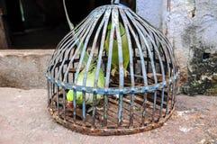 Papageien in einem Käfig in Indien Lizenzfreie Stockfotos
