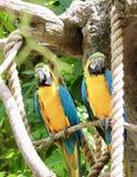 Papageien in Hülle und Fülle Stockbilder
