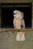 Papageien im russischen Zoo Stockfoto