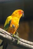 Papageien im russischen Zoo Lizenzfreies Stockfoto