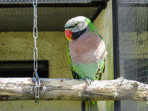 Papageien im russischen Zoo Stockbild