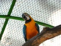 Papageien-Kakadu stockbild
