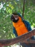 Papageien-Kakadu stockfotos