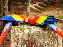 Papageien-Kuss lizenzfreie stockbilder