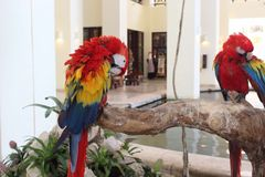 Papageien in Mexiko Stockbild
