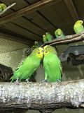 Papageien in Nowosibirsk lizenzfreies stockbild