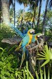 Papageien-Parade Lizenzfreie Stockbilder