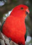 Papageien-Profil Lizenzfreies Stockbild