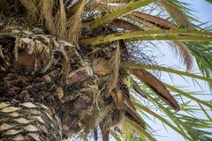 Papageien in seinem Nest Stockbilder
