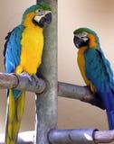 Papageien, unglaubliche Farben Lizenzfreie Stockfotos