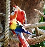 Papageienfütterung Lizenzfreie Stockfotografie