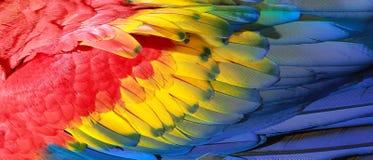 Papageienfedern Stockfoto
