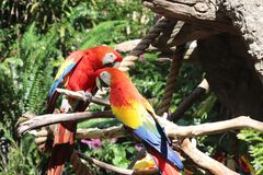 Papageienfreunde Stockbilder