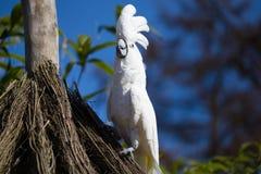 Papageienporträt des Vogels Szene der wild lebenden Tiere von der tropischen Natur Stockbilder