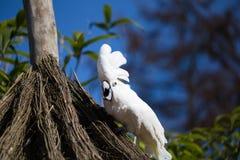 Papageienporträt des Vogels Szene der wild lebenden Tiere von der tropischen Natur Stockbild