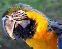 Papageienportrait Stockfotografie