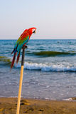 Papageienvögel lizenzfreie stockfotografie