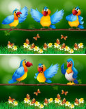 Papageienvögel im Blumengarten vektor abbildung