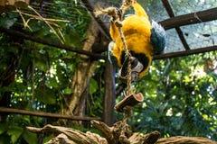 Papageienvogel wild lebender Tiere Mexikos Yucatan lizenzfreies stockbild