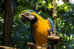 Papageienvogel 3 wild lebender Tiere Mexikos Yucatan stockbilder