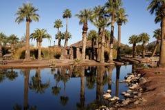 Papago Ponds. With Palm trees, Arizona, USA stock image