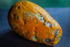 A papaia está indo ser podre fotografia de stock