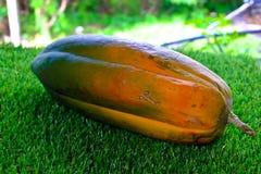 Papaia felice su erba verde Immagine Stock Libera da Diritti