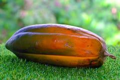 Papaia felice su erba verde Fotografie Stock Libere da Diritti