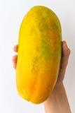 Papaia matura a disposizione Immagini Stock