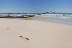 Papaia Playa Immagini Stock Libere da Diritti