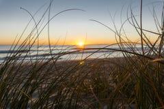 Papamoa beach through dune vegetation at sunrise Stock Photos