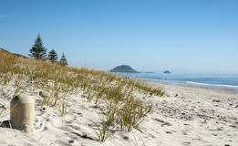 Papamoa Beach. Royalty Free Stock Image