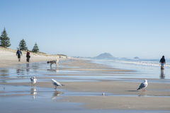 Papamoa Beach. Royalty Free Stock Photos