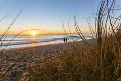 Papamoa beach, thorugh the marram  looking into sunrise Stock Image