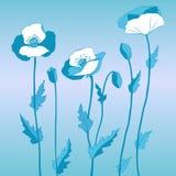 Papaver in blauwe stijl Stock Foto
