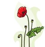 Papaver bloemenachtergrond stock illustratie